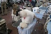 Poodle Puppies, Pedigrees, videos, pictures and more.